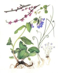 All Nature Is But Art: Botanical Art Society of the National Capital Region @ Glen Echo Park