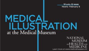 Medical Illustration: Hearts @ National Museum of Health and Medicine