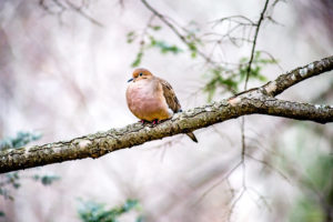 Hike & Seek: Snow Birds @ Locust Grove Nature Center |  |  |