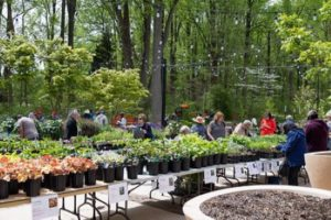 Spring Native Plant Sale @ Locust Grove Nature Center | | |