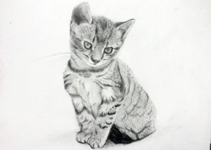 Pet Portraits ONLINE @ Online/Virtual | | |