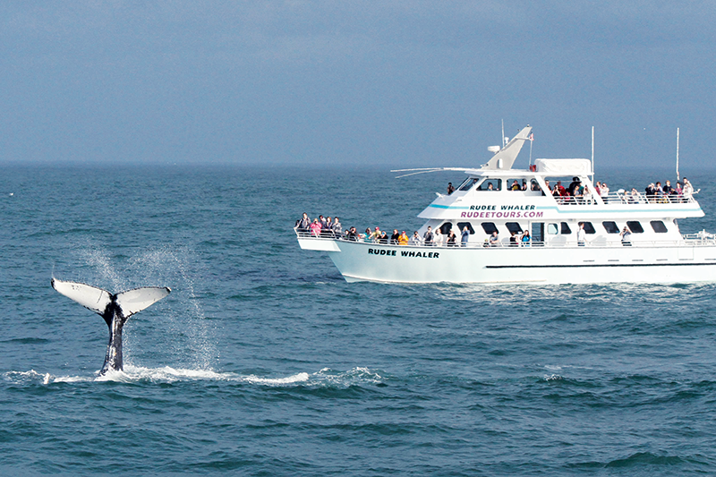 If You Don T Spot A Whale On Rudee Tours Outing Can Ride Again For Free Photos By Kristin Rayfield